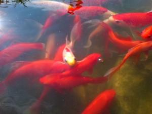 fishies2